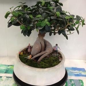 new植物!!!